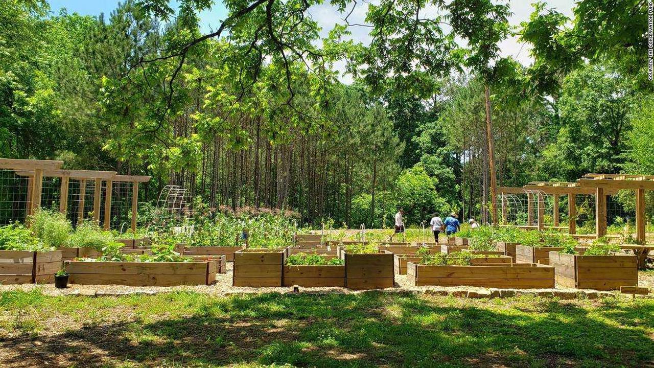 Atlanta food forest